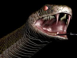 Image result for teeth in snakes