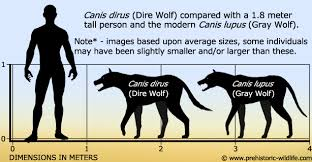 grey wolf size canis dirus dire wolf