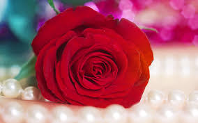 Image result for broken red roses