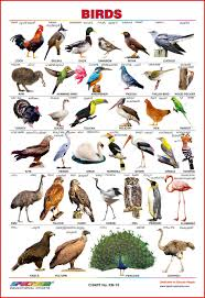 Birds Chart With Names In English Spectrum Educational Wall Charts Set Of 4 Kannada