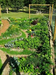 Small Picture permaculture garden design Dream Gardens Pinterest