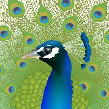 <b>Peacock</b> | Food4Rhino