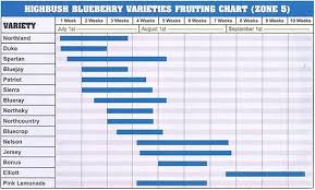 Blueberry Ripening Chart Bare Root Strawberry Plants Blueberry Plants For Sale