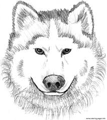 Print Realistic Wolf Face Coloring Pages