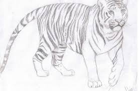 easy tiger pencil drawing. Unique Pencil Tag For Easy Drawing Of A Tiger  Litle Pups Intended Tiger Pencil Drawing T