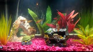 My First Amazing & Colorful 10 Gallon Tropical Community Fish Tank! - Check  it Out! - YouTube