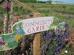 community gardening.  Gardening Community Garden And Gardening E