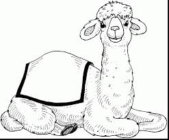 Small Picture surprising camel coloring pages realistic with camel coloring page