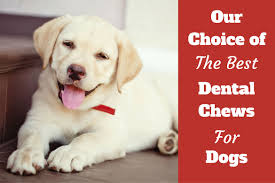 best dental chews for dogs roundup review and ing advice