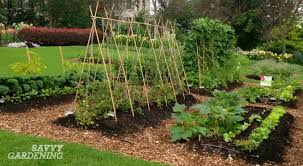 vegetable gardening tips every new food