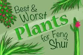 Money Feng Shui House Plants And What They Mean Urban Monk Nutrition Feng Shui Plants Bring Good Energy Into Your Home Or Office