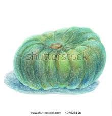 pumpkin drawing color. green flat pumpkin isolated on white. colored pencil drawing. hand-drawn crayon design drawing color