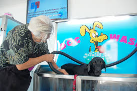 onyx left receives a wash in the k9000 a self service dog