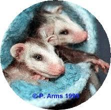 National Opossum Society