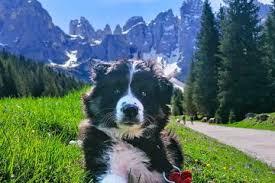 TripForDog - BauTour e Viaggi Dog Friendly con il tuo Cane