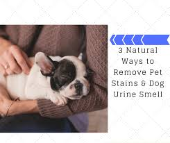 remove pet stains dog urine smell