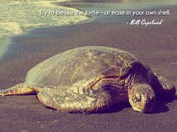Turtle Quotes Try to be like the turtle at ease in your own shell Bill Copeland 23