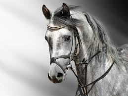 horses wallpaper black and white. Brilliant Wallpaper Wallpapers For U003e White Horse Wallpaper Hd On Horses Black And E
