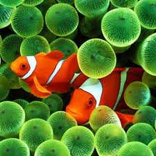 Fish Backgrounds Fish Pictures Fish Wallpapers Backgrounds By Floor Girls