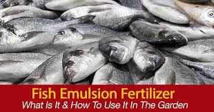 Alaska Fish Fertilizer Feeding Chart What Is Fish Emulsion Fertilizer How To To Use It In The