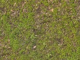 dirt grass texture seamless. Ground Texture With Dry Leaves In Short, Green Grass. Dirt Grass Seamless