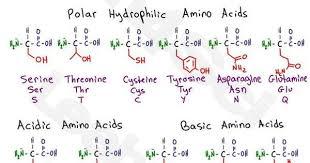 Mcat Amino Acid Chart Biochemistry Cheat Sheet Pdf Related Keywords Suggestions