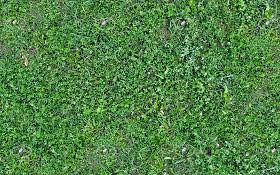 wild grass texture. Fine Texture PREVIEW Textures  NATURE ELEMENTS VEGETATION Green Grass Wild Green  Texture Seamless 20654 Throughout Grass Texture W