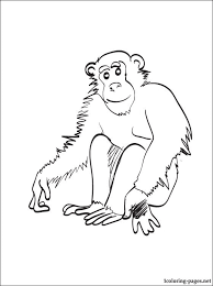 Small Picture Chimpanzee Coloring Page Coloring Pages Within Chimpanzee Coloring