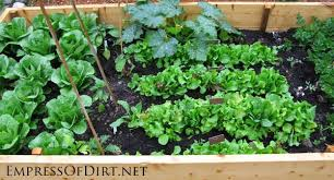 Small Picture 20 Ideas For Your Home Veggie Garden Empress of Dirt