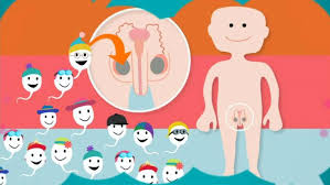 How Babies Are Made New Swedish Kids Video Explains How Babies Are Made Radio Sweden