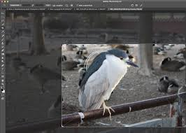 cropping photography. Brilliant Cropping Triangle Crop Shot Intended Cropping Photography O