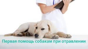 Реферат на тему первая мед помощь при Симптомы собаку беспрерывно рвет животное испытывает беспокойство животное испытывает боли в животе расчесывает реферат на тему первая мед помощь при
