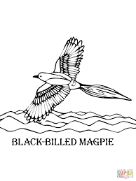 Small Picture Magpie coloring pages Free Coloring Pages
