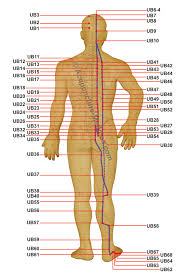 Urinary Bladder Meridian Acupuncture