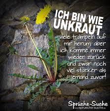 Unkraut Löwenzahn Motivation Sprüche Sprüche Suche