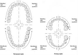 Tooth Numbering Systems In Dentistry News Dentagama