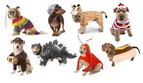 Dog Halloween Costume, Dog Costumes, Pet Costumes, Halloween Costumes For  Dogs, Halloween