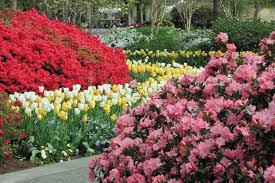 botanic gardens fun activities tourist attractions and best things to do in dallas living