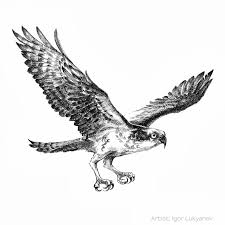 flying bird drawing. Fine Drawing Flying Bird Realistic Drawing Intended A