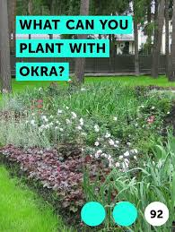 What Can You Plant With Okra Plants Okra Plant