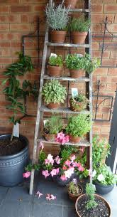 Old ladder loaded up with pots of herbs. Tahitian Lime Tree espaliered  behind against the. Garden LadderBalcony ...