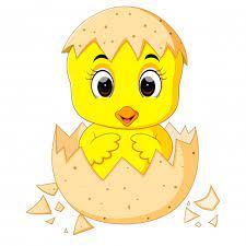 Petit Poussin De Dessin Animé éclos D'un œuf | Vecteur Premium