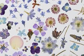 Flower Pressed Paper Pressed Flower Tips And Tricks From Our Studio Paperless