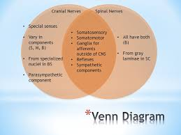 Central Nervous System Vs Peripheral Nervous System Venn Diagram Compare And Contrast Cranial Nerves To Spinal Nerves Know Which