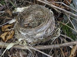 Birds Nest Bed Architecture Review Bird Nest Stadium Lildhikas Weblog