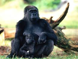 wild animals in african forest.  African Encyclopaedia Of Babies Beautiful Wild Animals And In African Forest N