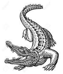 Tribal Pattern Predator Banque D Images Vecteurs Et Illustrations