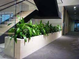 office planter boxes. Office Planter. Dracaena In Timber Planter Boxes Throughout P L