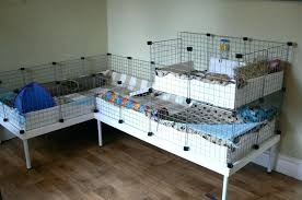 the 10 best guinea pig cage in 2021