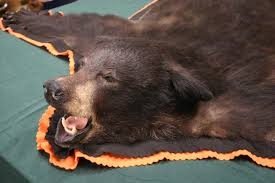 the picture for the full size bear rug